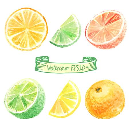 Illustration pour hand drawn watercolor illustration. Citrus set. orange, lime, lemon, grapefruit - image libre de droit