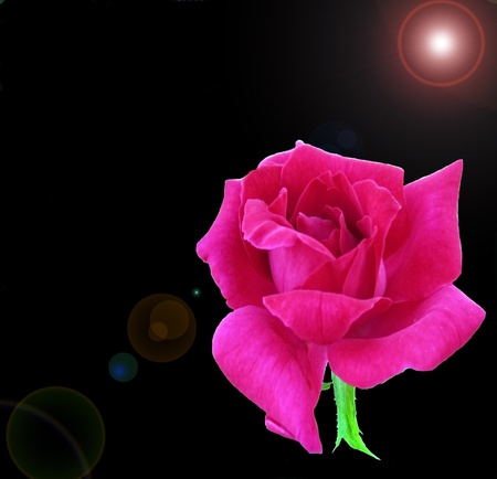 Pink rose in black background with flaring lights