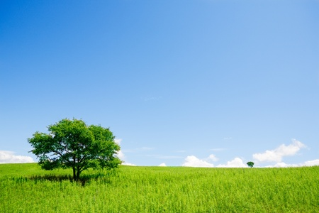 Photo for Two trees in an open field - Royalty Free Image