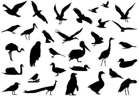 Illustration for Shadows of birds created a line drawing. Created by real photograph birds. - Royalty Free Image