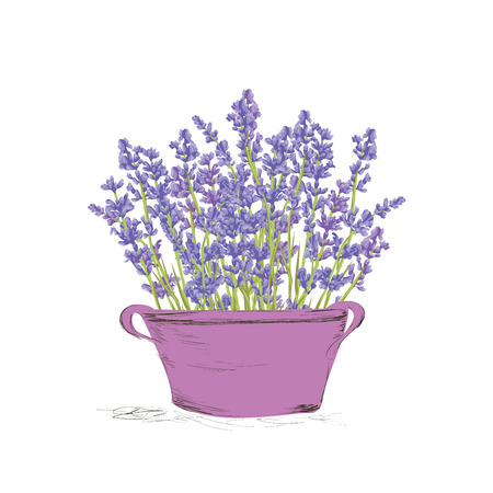 Illustration pour Hand drawn lavender flowers in vintage pot . Hand drawn design for Thank you card, Greeting card or Invitation. Vector illustration. - image libre de droit