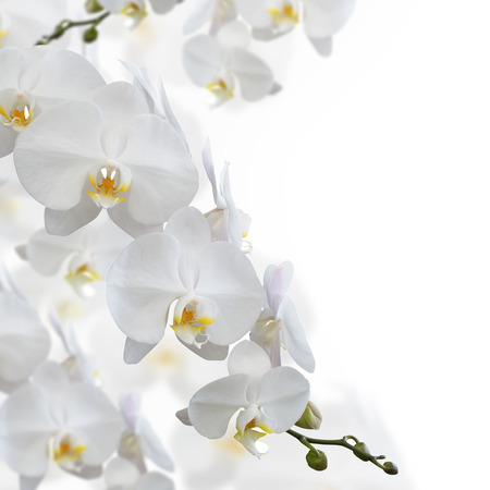 Photo pour White orchid flower isolated on white background - image libre de droit