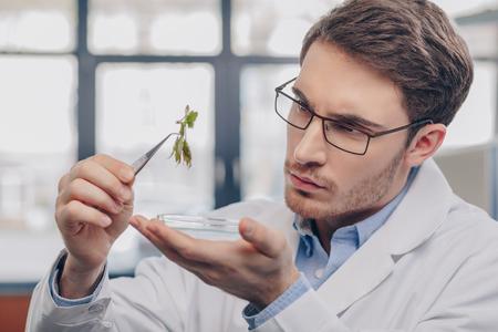 Foto de biologist looking at plant in tweezers - Imagen libre de derechos