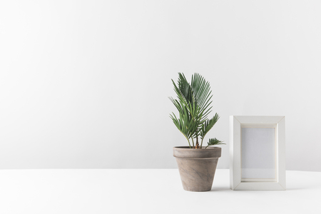 Photo for beautiful green potted plant and empty photo frame on white - Royalty Free Image