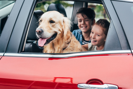 Photo for happy kids sitting on backseats in car with dog - Royalty Free Image
