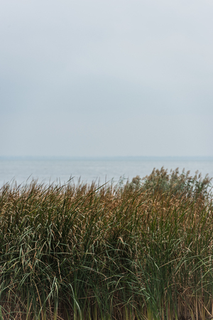 Foto de beautiful calm sea with green grassweed on foreground on cloudy day - Imagen libre de derechos