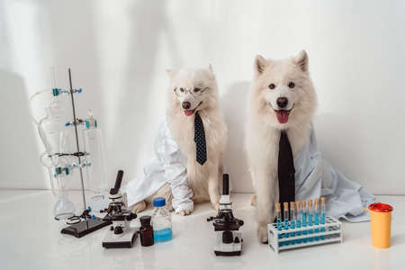 Foto de two fluffy dogs scientists lab coats working with microscopes and test tubes in laboratory - Imagen libre de derechos
