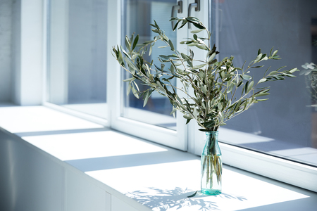 Photo for bottle with olive branches on window sill with shadow - Royalty Free Image