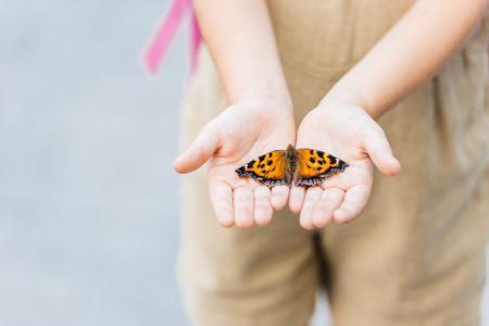 Foto de cropped shot of little child holding butterfly in hands - Imagen libre de derechos