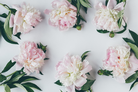 Photo for top view of frame with light pink peony flowers with leaves on white - Royalty Free Image