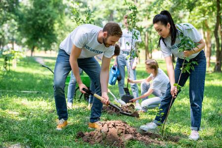 Foto de volunteers planting trees in green park together - Imagen libre de derechos