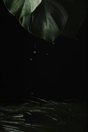 Foto de close-up view of green wet tropical leaves and water drops on black - Imagen libre de derechos