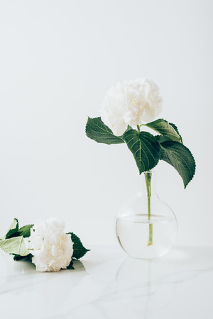 Photo for white blooming flowers of hydrangea in vase and on white surface - Royalty Free Image