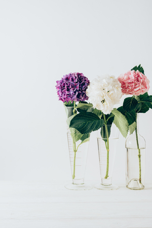 Photo for pink, purple and white flowers of hydrangea in glass vases, on white - Royalty Free Image