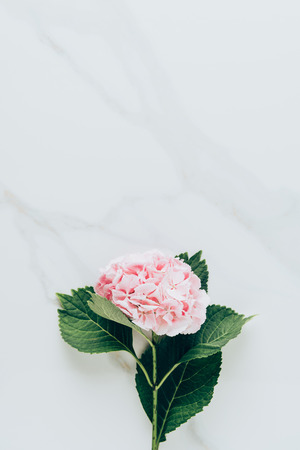 Photo for top view of pink hydrangea flower with leaves on marble surface - Royalty Free Image