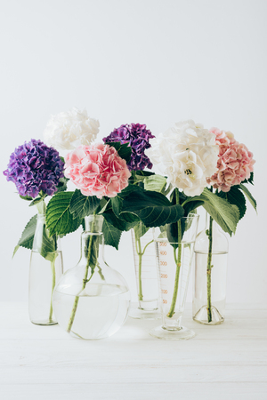 Photo for colorful hydrangea flowers in glass vases, on white - Royalty Free Image