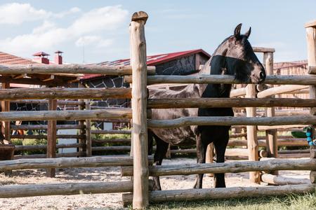 Foto de close up image of horse standing near wooden fence in corral at zoo - Imagen libre de derechos