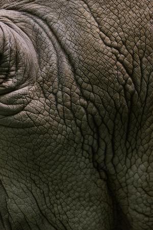 Foto de full frame image of white rhino skin background - Imagen libre de derechos