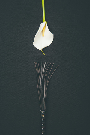 Photo for Black leather flogging whip with white calla flower isolated on black - Royalty Free Image