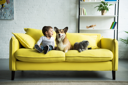 Photo for happy child sitting on yellow sofa with pets - Royalty Free Image