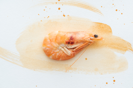 Photo for top view of raw shrimp on white tabletop with watercolor strokes - Royalty Free Image