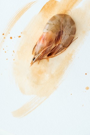 Photo for top view of uncooked prawn on white surface with watercolor strokes - Royalty Free Image