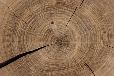 Photo pour Circular sawed wood detailed background - image libre de droit