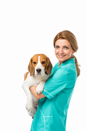 Photo pour side view of smiling veterinarian in uniform holding cute beagle dog isolated on white - image libre de droit