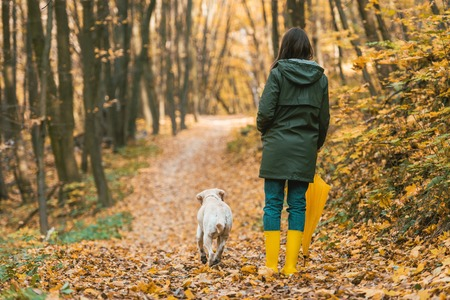 Photo for Back view of woman in gumboots holding yellow umbrella and walking with dog on leafy path in autumnal forest - Royalty Free Image