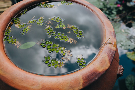 Foto per close-up view of green leaves in water in pot and pond in Hue, Vietnam - Immagine Royalty Free