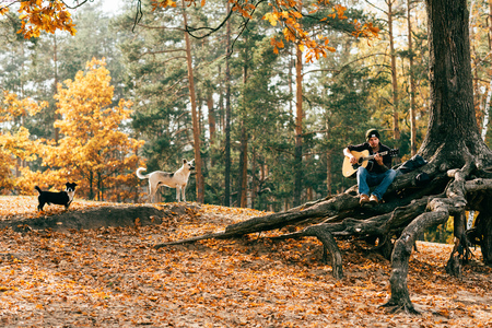Photo for man playing acoustic guitar while sitting on tree in park with dogs - Royalty Free Image
