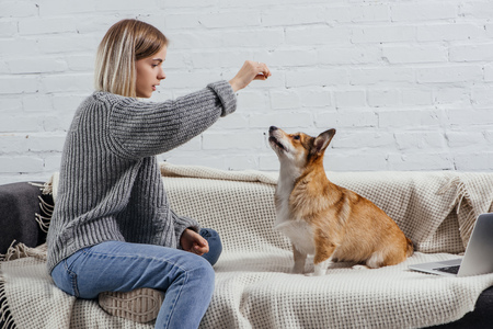 Foto de beautiful young woman training adorable pembroke welsh corgi with dog treat - Imagen libre de derechos