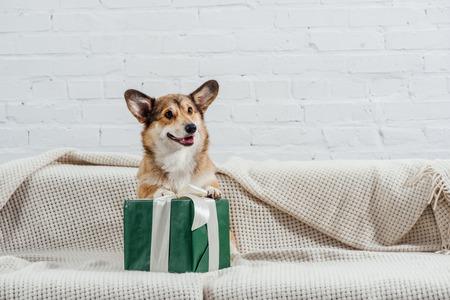 Foto de cute pembroke welsh corgi dog on sofa with green gift - Imagen libre de derechos