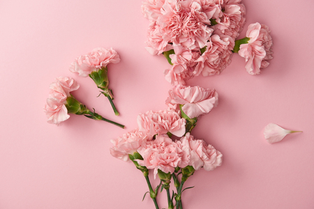 Photo pour top view of beautiful pink carnation flowers isolated on pink background - image libre de droit