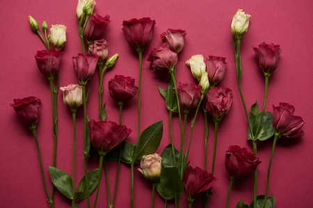 Photo for blooming flowers with green leaves on ruby background - Royalty Free Image
