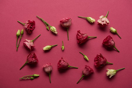 Photo for blooming white and pink flowers on ruby background - Royalty Free Image