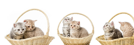 collage of cats in basket isolated on white