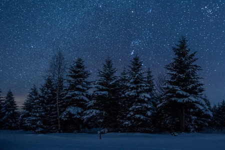 Foto de dark sky full of shiny stars in carpathian mountains in winter forest at night - Imagen libre de derechos