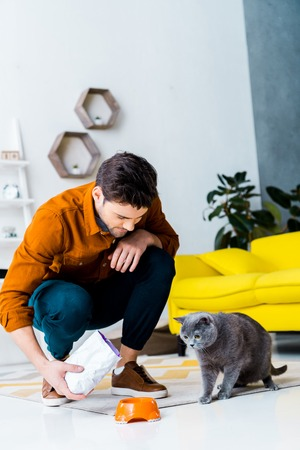 Foto de handsome man feeding grey british shorthair cat in living room - Imagen libre de derechos