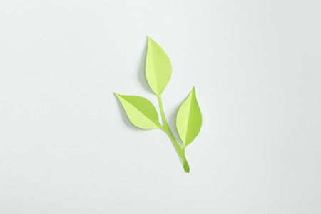 Photo for top view of green paper plant on grey background - Royalty Free Image