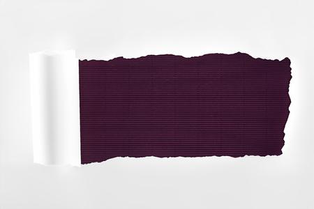 Foto de tattered textured white paper with rolled edge on purple background - Imagen libre de derechos