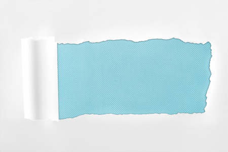 Foto de ragged textured white paper with rolled edge on light blue background - Imagen libre de derechos