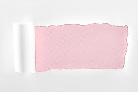 Foto de ragged textured white paper with rolled edge on pink background - Imagen libre de derechos