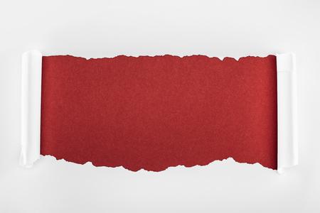 Foto de ragged textured white paper with curl edges on burgundy background - Imagen libre de derechos