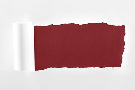 Foto de ragged textured paper with rolled edge on burgundy background - Imagen libre de derechos