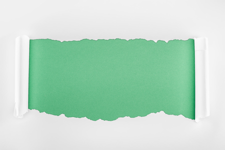 Foto de ripped textured white paper with curl edges on light green background - Imagen libre de derechos