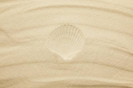 Foto de top view of sandy beach with seashell print in summertime - Imagen libre de derechos