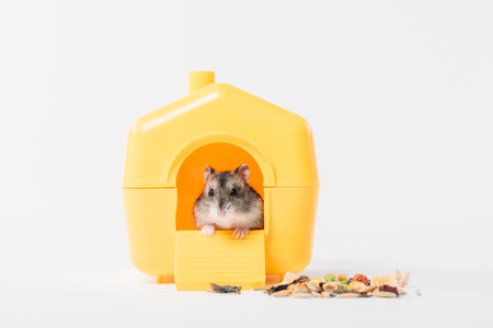 Photo for cute, funny hamster inside yellow plastic pet house on grey - Royalty Free Image