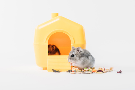 Photo for Funny fluffy hamster near pet house with one hamster inside on grey background - Royalty Free Image