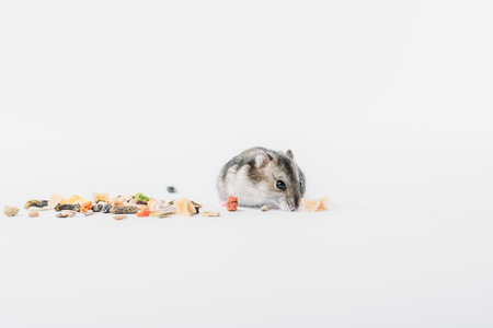Photo for Funny, adorable hamster near dry pet food on grey background with copy space - Royalty Free Image
